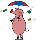 Free Rainy Pig Royalty Free Stock Image - 1008936
