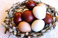 Free Easter Dyed Eggs In A Pussy-willow Nest Royalty Free Stock Image - 11690086