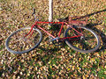 Free Red Old Bicycle Tied To A Tree Stock Image - 11984561