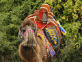 Free Camel Royalty Free Stock Image - 12248246