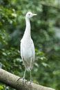 Free Egret Stock Photography - 1351612