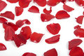 Free Red Rose Petals Stock Images - 13833484