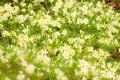 Free Bloom Lawn Stock Image - 13872481