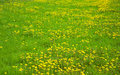 Free Green Grass Field Royalty Free Stock Image - 14291946
