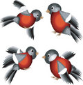 Free Set Of The Bullfinches Stock Photos - 14869273