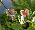 Free Two Fairy On Vegetation Royalty Free Stock Photography - 15537237