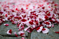 Free Petals On The Street Royalty Free Stock Photos - 16305458