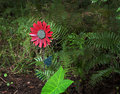 Free Fake Flower In The Woods Centered Royalty Free Stock Image - 16320316