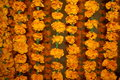 Free Flowers Background Stock Photography - 1669142