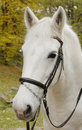 Free Close-up Picture Of White Horse In The Park Royalty Free Stock Image - 16649966
