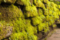 Free Overgrown With Moss Stock Image - 17018121