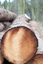 Free Deforestation - Stack Of Trunks Royalty Free Stock Photography - 18752997