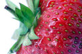 Free Strawberry. Macro Royalty Free Stock Photography - 1890617
