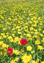 Free Flowers In A Field Stock Images - 19622564