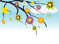 Free Tree With Flowers Stock Photography - 19664092