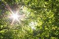 Sun star through woodland canopy