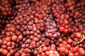 Free Red Grapes Stock Images - 20949234