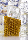 Free Cold Honey Comb Royalty Free Stock Photos - 2169088