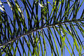 Free Palm Frond Stock Image - 234021