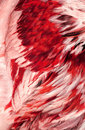 Free Abstract Red Feathers Stock Images - 2312634