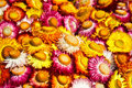 Free Colorful Flower Royalty Free Stock Images - 23625059