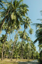 Free Palm Tree In Rural Area Royalty Free Stock Photo - 2420865