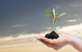 Free Hand Holding A Small Plant Stock Photography - 24794352