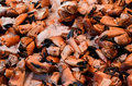 Free Crab Claws Stock Image - 25000251