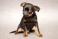 Free Little Puppy Royalty Free Stock Photos - 25108958