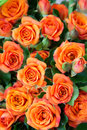 Free Apricot Roses Bouquet Royalty Free Stock Photography - 25338347