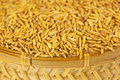 Free Paddy Rice In Basket Royalty Free Stock Photography - 25383197