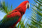 Free Parrot Royalty Free Stock Image - 25429266