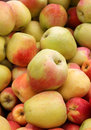 Free Ripe Fresh Apples Royalty Free Stock Images - 25762999