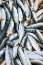 Free Fresh Sardines In Market Royalty Free Stock Images - 2601719