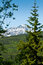 Free Forest And Mountains In Skagway, Alaska Royalty Free Stock Photos - 26676128