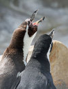 Free Penguin Royalty Free Stock Images - 26724169