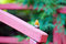 Free Red Robin Stock Image - 26877781