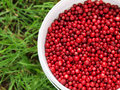 Free Cranberries In A Bucket Stock Image - 26948361