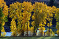 Free Autumn Trees In Front Of Blue River Stock Photo - 270820