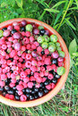 Free Fresh Berries In The Red Bucket Stock Photos - 27761343