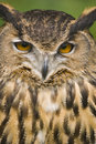 Free European Eagle Owl Royalty Free Stock Photography - 2783427