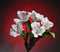 Free White Flowers On Red Stock Photo - 27882870