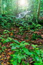 Free Rain Forest Royalty Free Stock Photography - 28013317