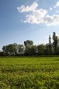 Free Trees And Lawn Stock Photo - 28131110