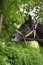 Free Horse On A Background Of Foliage Stock Photography - 28145462