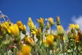 Free Yellow Flowers Stock Images - 28293414