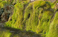 Free Moss On The Rocks Royalty Free Stock Image - 28487916