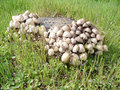 Free Group Of Mushrooms Royalty Free Stock Images - 28505829