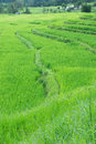 Free Green Terraced Rice Field Of Thailand Stock Image - 28577321