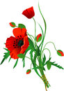 Free Bouquet Of Poppies Stock Photography - 28614562